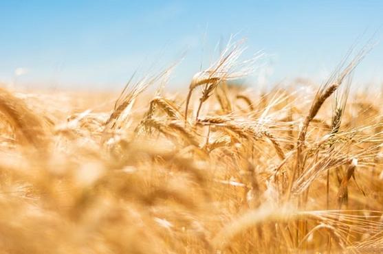 Phénomène « sans gluten » : vraie bonne idée ou intox ?